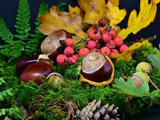dekorace z kaštanů, přírodní plodiny