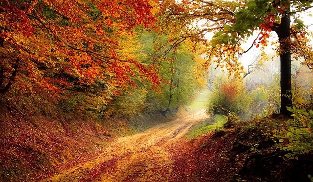 Podzimní období – zahrada